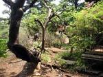 PICT0003坂浜柿の木ブログ.jpg