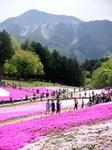 PICT0005武甲山と芝桜.jpg